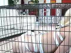 Teagan Summers placed in a cage sucking some balls